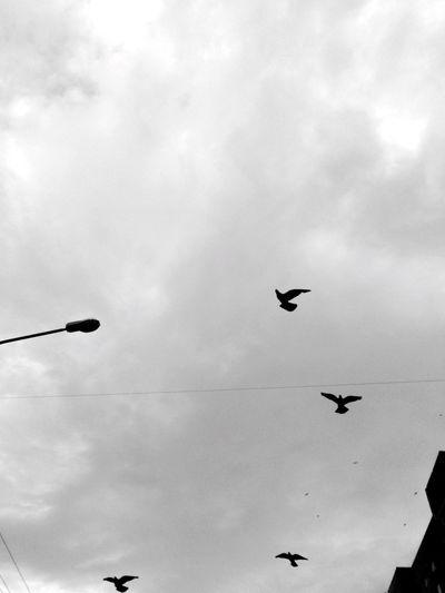 Black & White Black And White Birds Birds_collection Sky_collection Clouds And Sky Blackandwhite Monochrome
