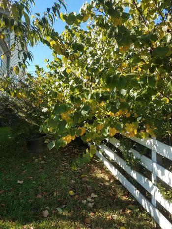 Fall leaves trees autumn orange fence