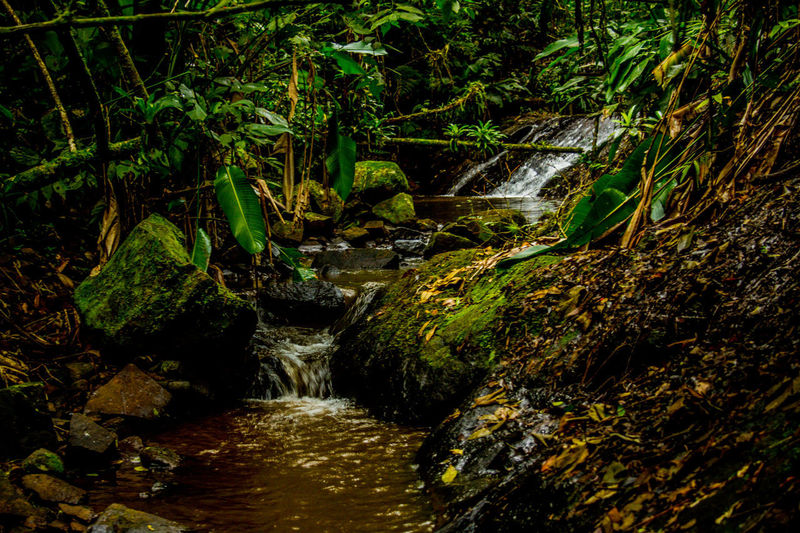 Ecoturismo Meleiro, Brazil Turismo De Aventura Beauty In Nature Day Ecoturism Forest Growth Long Exposure Moss Motion Nature No People Outdoors Plant Rock - Object Scenics Stream Tranquil Scene Tranquility Tree Water Waterfall