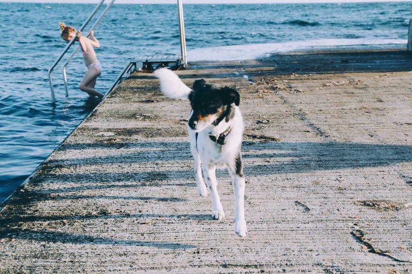 Water Dog Sea Outdoors Day Beach Pets Nature Domestic Animals Sand Animal Themes Full Length Mammal One Person People Summer Leisure Activity Swim Girl Pet Walking Friendship Dog Running Lifestyles Swim