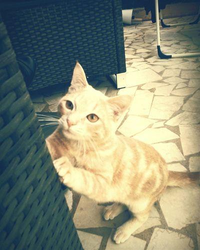 Pollo ♥ Mon Bebe ❤ A Moi Pollo I Love My Cats