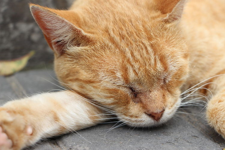 #cat #sleep #good