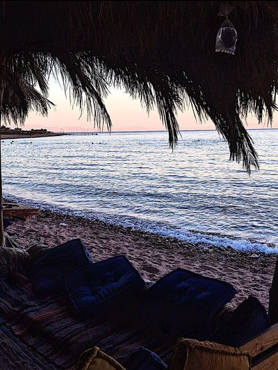 Peace of mind 💆🏼 Sea Beach Palm Tree Beauty In Nature Nature Water Sunset Horizon Over Water Sand Tree Day Sky Tourism Thisisegypt Egypt Lifestyles EyeEm Best Shots Young Adult IPhoneography Sea And Sky RedSea Readsea Wunderlust 3pools Southsinai