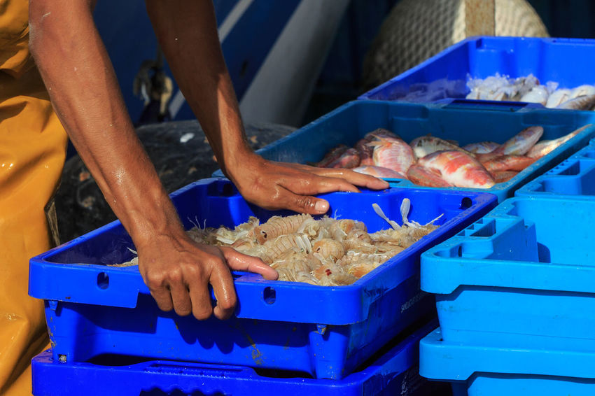 Box Fishing Food Hand Market One Person