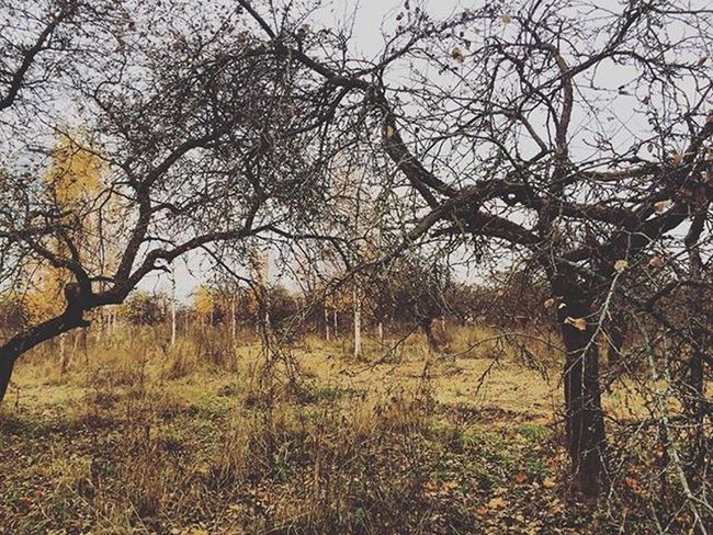 листопад вівторок ноябрь Минск осень Autumn November Minsk