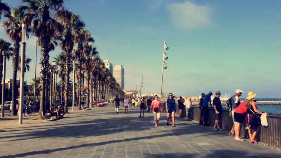Barcelona SPAIN España Playa Beach Palm Trees Blue Sky Summer Summertime Holiday