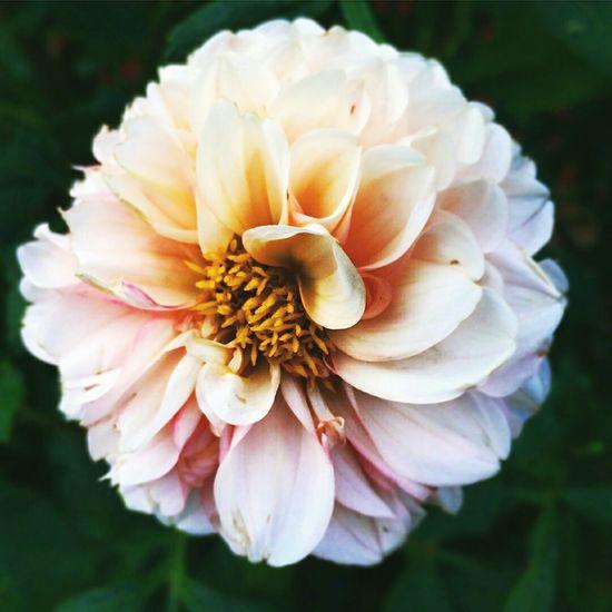 Flowers Flower Macro Flor Floral Flora Colour Of Life Maximum Closeness