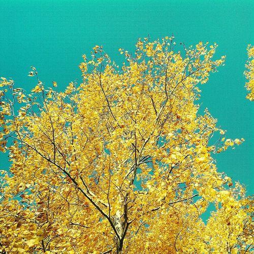 осень листва красиво прогулка грусть Autumn небо Walk Way Nature Sky Life Wonderfull краски  Дорога Россия Russia Fall Road Colours береза Yellow Birch