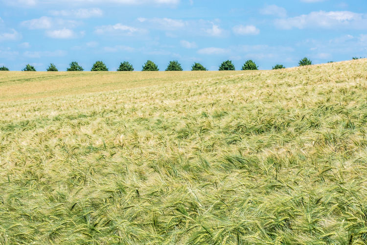2016_06_Redentin_DE 43 Golden Moments Argiculture Argile Baltic Baltic Sea Barley Farming Field Idyllic Landscape Landscape_Collection Landscape_photography Mecklenburg-Vorpommern Redentin The OO Mission