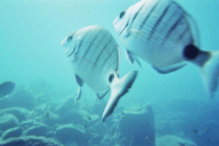 Submarine Animals Aquatique