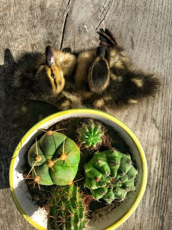 No People High Angle View Table Indoors  Animal Wood - Material Animal Themes Close-up Nature Insect Day Animal Wildlife Food And Drink Plant Part Sunlight Invertebrate Directly Above Green Color One Animal Leaf