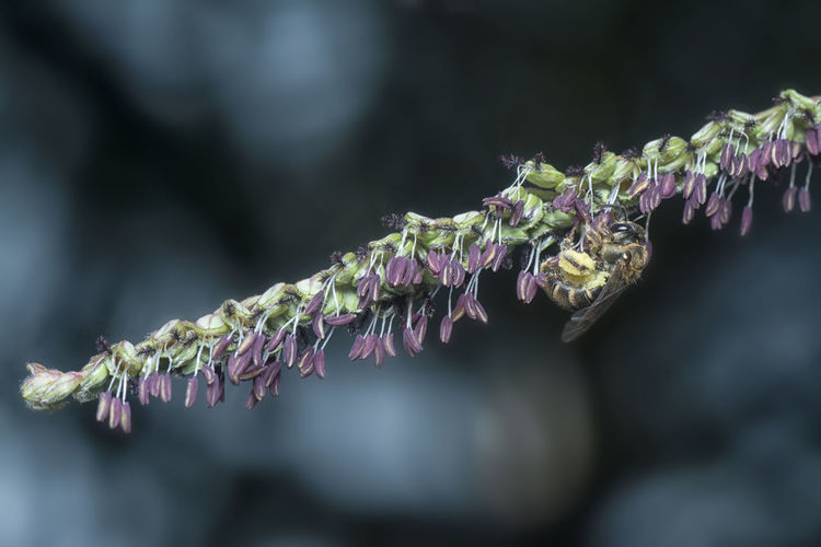 Close-up of frozen flowers in winter