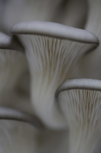 Close-up of white mushroom
