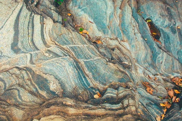 Full frame shot of tree trunk rock