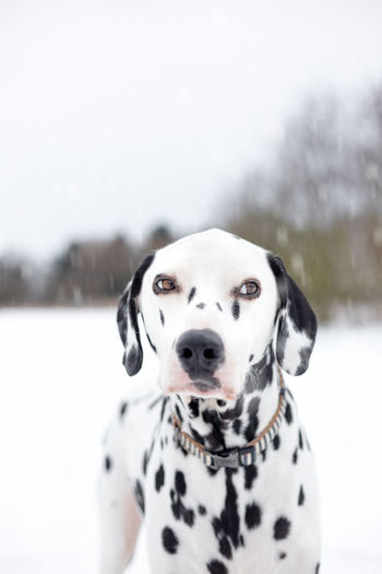 EyeEm Best Shots EyeEmNewHere EyeEm Selects EyeEmBestPics EyeEmWinter Winter Front View Pet Collar Spotted