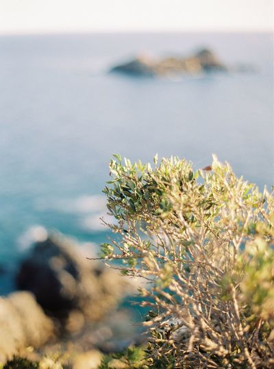 Film Photography Sea Water Nature Flower Sky Day Outdoors Tranquility Plant Growth Freshness Scenics Beauty In Nature No People Focus On Foreground