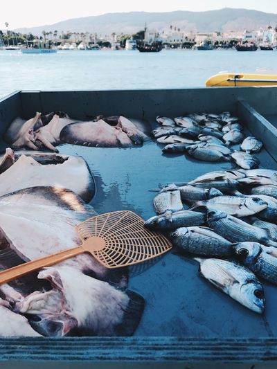 High angle view of fishes in boat on sea