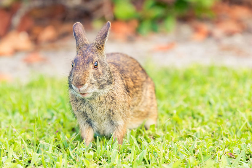 50+ Rabbit Pictures HD | Download Authentic Images on EyeEm