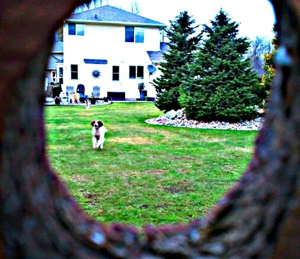 Through the knothole in the fence, I see for the first time, dogs that bark at me every week. Taking Photos Walking Around EyeEm Nature Lover Another Day On The Job