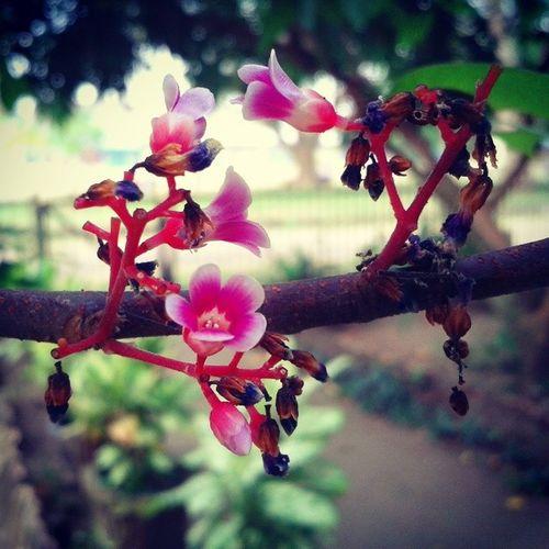 Flower Nature Macro Macroaddictsanonymous ace3 kofipon photooftheday