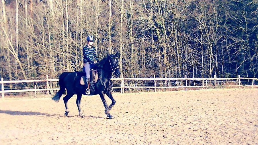Horseriding KDA Myhorse♡ Kasaque