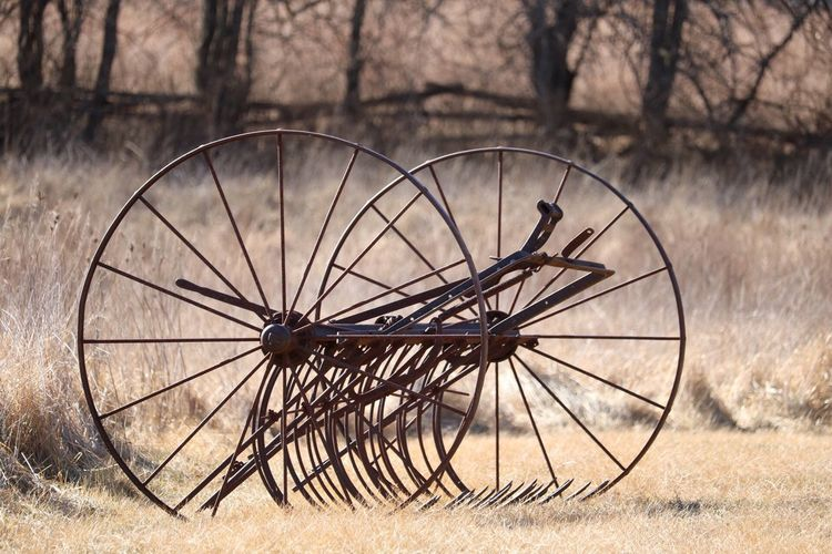 Wagon Wheel Field No People Wood - Material Wheel Tree Outdoors