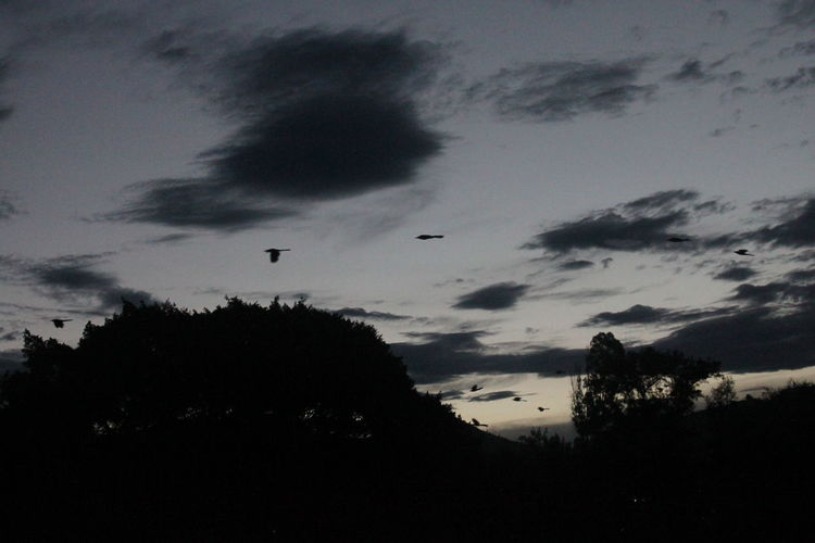 Silhouette birds flying against sky at sunset