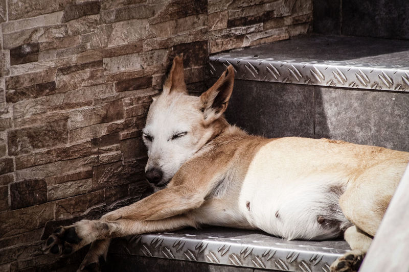 High angle view of animal sleeping on wall