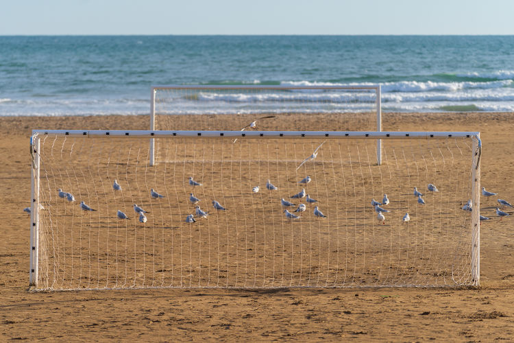 Birds perching on sand at beach by goal post