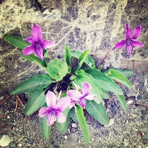 Nature Flower Violet Eye4photography