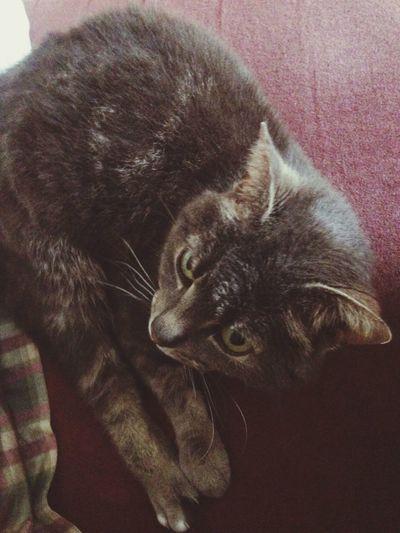 Beautiful little three toed Kitty Cat Eyembestshots