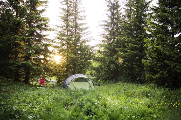 Camping Forest Schweiss Schweiz Sunset Switzerland Tent Wildcamping Zelt Camp