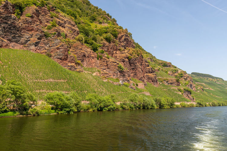 River moselle near zeltingen-rachtig and mountain with vineyards and slate rocks