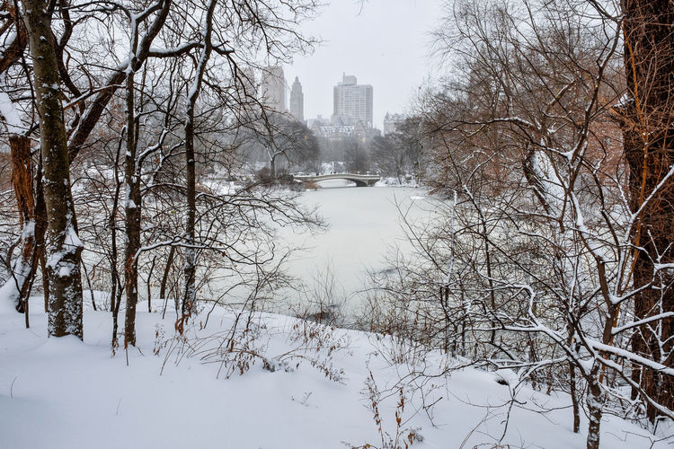 Scenic view of snow covered trees and buildings
