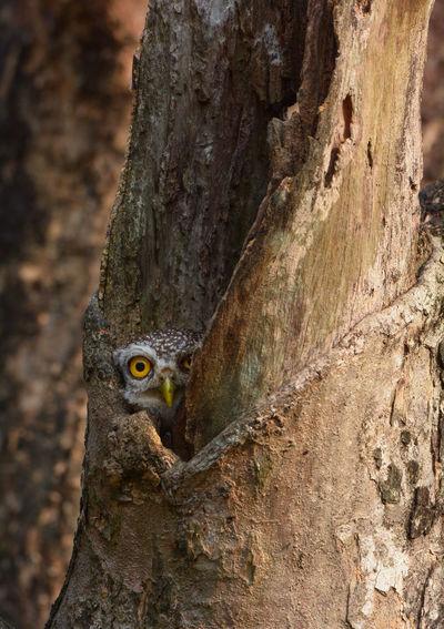 Portrait of owl in tree trunk