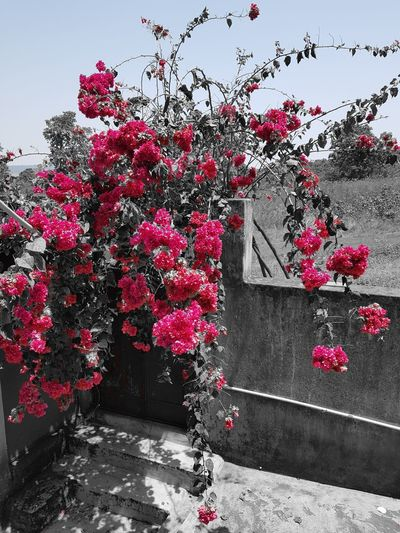 EyeEmNewHere Flower Red Pink Color Sky Plant