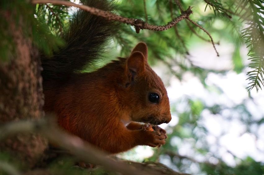 Squirrel Animal EyeEm Nature Lover Animal Love