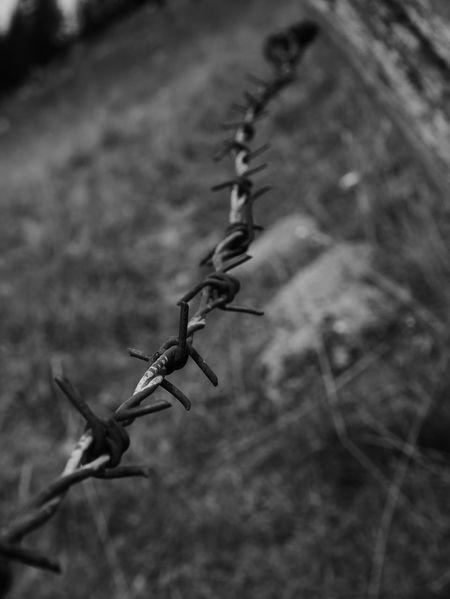 barbed wire Stacheldraht Stacheldrahtzaun Chain Prison Weidezaun Black And White Steel Structure  Metal Industry Farmland