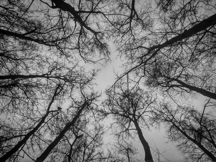 Trees TreePorn B/w Russia Nature Sadness Moscow Park Blackandwhite Black & White Trees And Sky Eyemphotography Eyembestshots Photography Photooftheday Photo Shoot Xiaomiphotograph RedmiNote Pure Naturelovers