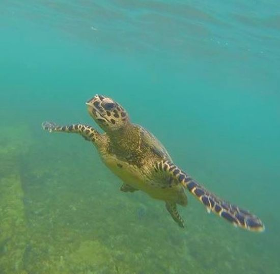 Underwater Turtles Sea Turtle Scuba Diving Scubalife Taking Photos Relaxing Enjoying Life Underwater Photography
