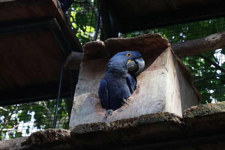 Low angle view of parrot perching on wood