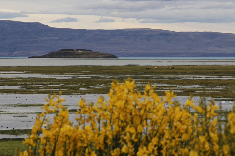 Mountain Beauty In Nature Sky Water Scenics - Nature Plant Tranquil Scene Nature Tranquility Yellow No People Environment Landscape Day Lake Flower Non-urban Scene Growth Cloud - Sky Outdoors Argentina Lago Argentino