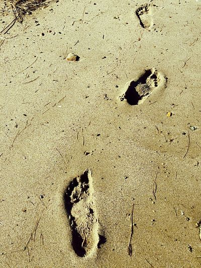 Sand Beach Animal Track FootPrint Paw Print High Angle View Day Outdoors No People Nature Track - Imprint Sunlight Animals In The Wild Animal Themes Close-up Duxbury Beach