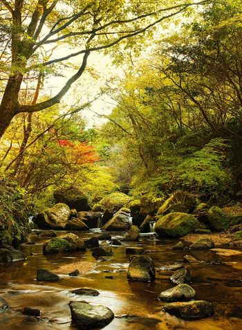 -Beauty of Nature- Tree Nature Beauty In Nature Leaf Autumn Outdoors Water No People Japanese Garden Seto Nagoya Sigma 35mm Art Canonphotography Japan Photography Japan Autumn Landscape Travel Destinations Tree Forest Nature Lake Canon 5d Mark Lll