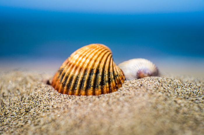 Beach Beauty In Nature Close-up Conchiglie Mare Nature Outdoors Sabbia Sand Sea Seashell Summer Exploratorium