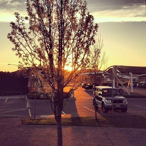 Golden hour at work car park :-)