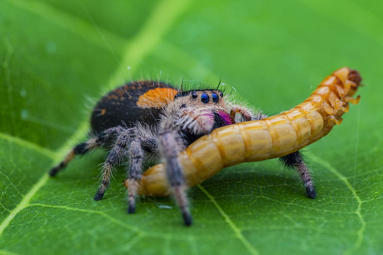 Close-up of spider and insect on leaf