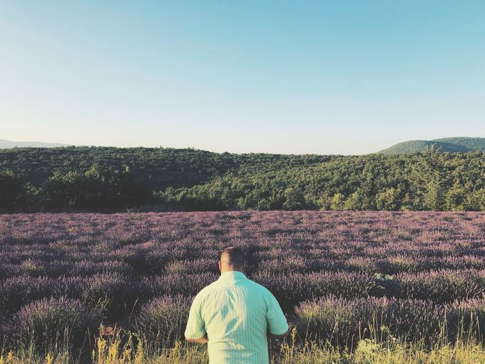 Rear view of mid adult man standing at lavender farm against clear sky
