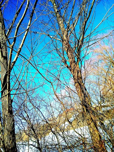 🌿 Tree Low Angle View Sky Blue Nature Growth No People Day Outdoors Full Frame Backgrounds Clear Sky Beauty In Nature Branch Close-up