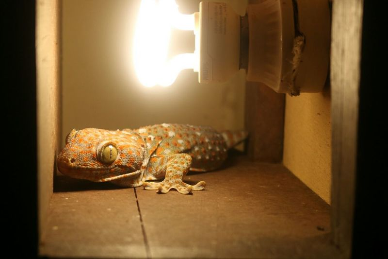 Close-up of lizard by illuminated electric bulb